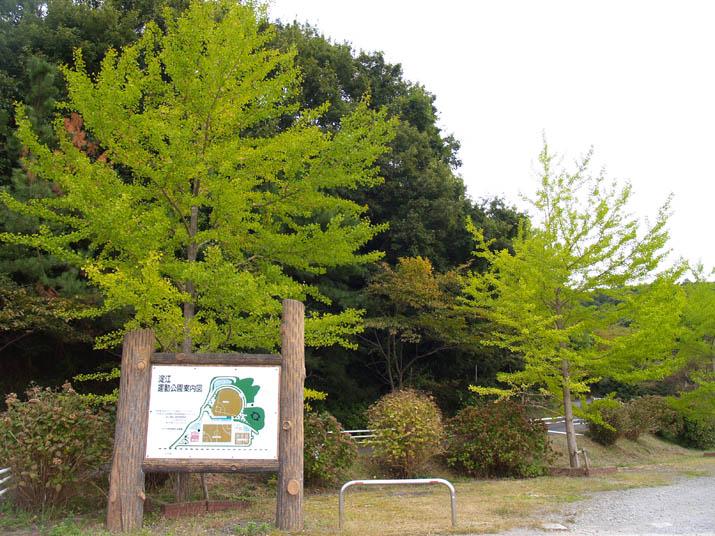 100929 淀江運動公園のイチョウ.jpg