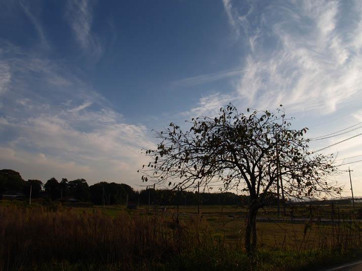 101019 寂しげな柿の木.jpg