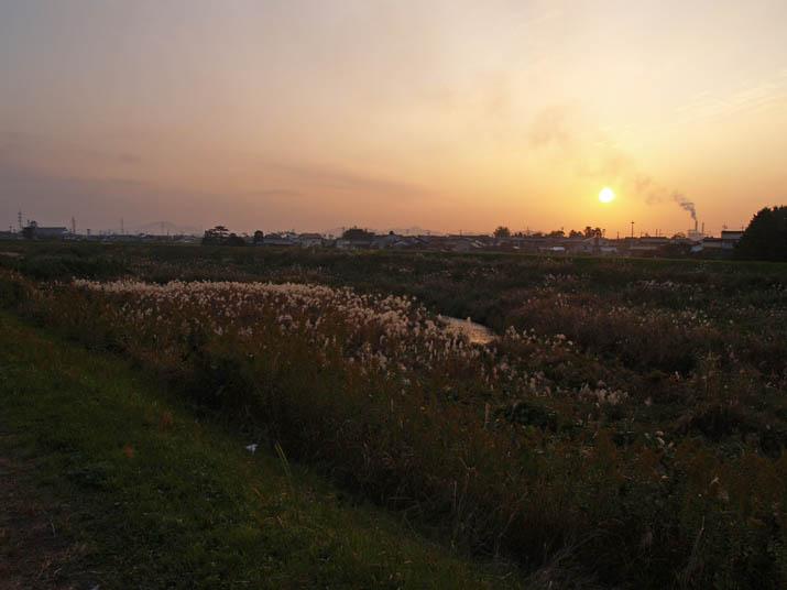 101114 ススキの河原と夕日.jpg
