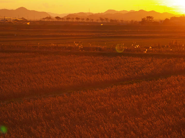 101118 夕日に染まる畑.jpg