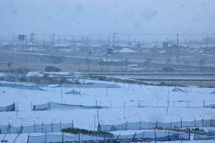 101213 今年1月の大雪.jpg