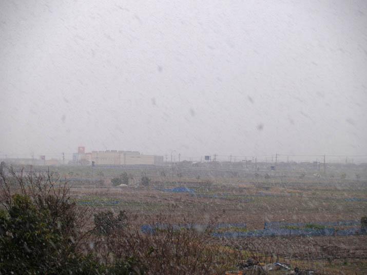 101216 夕方の雪.jpg
