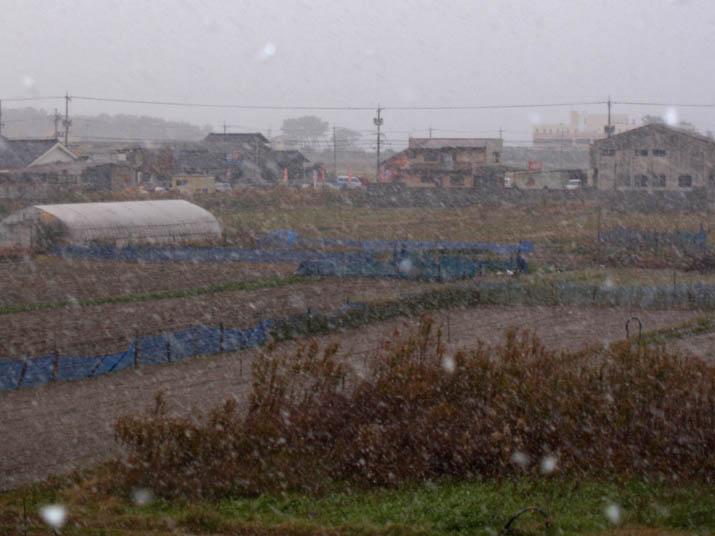 101216 舞い散る雪.jpg