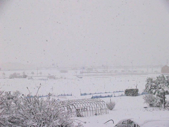 101231 大雪.jpg