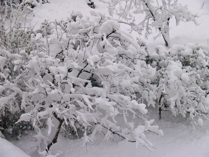 101231 雪の木.jpg