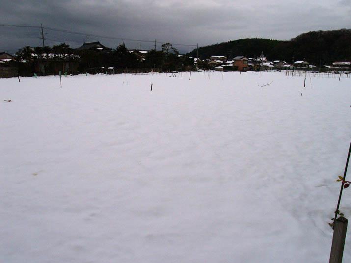 110103 農作物は雪の中.jpg