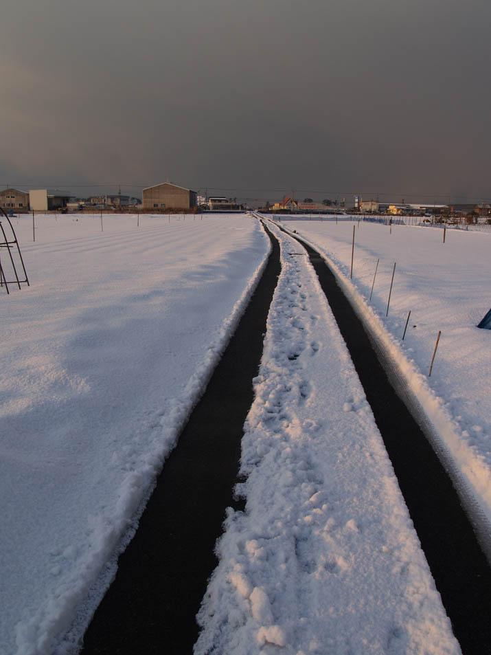 110126 雪原の道.jpg