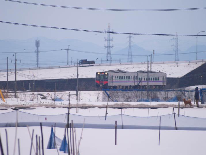 110201 ワンコの散歩と普通列車.jpg