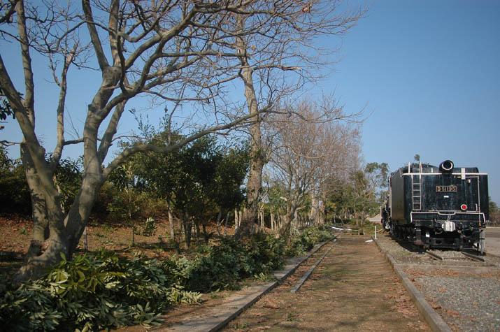 110203 湊山公園脇の木がポキポキ.jpg