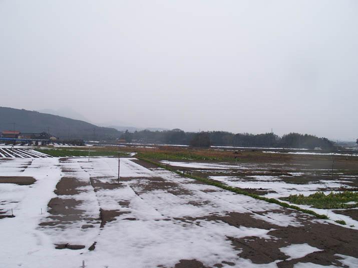 110208 雪解け進む畑.jpg