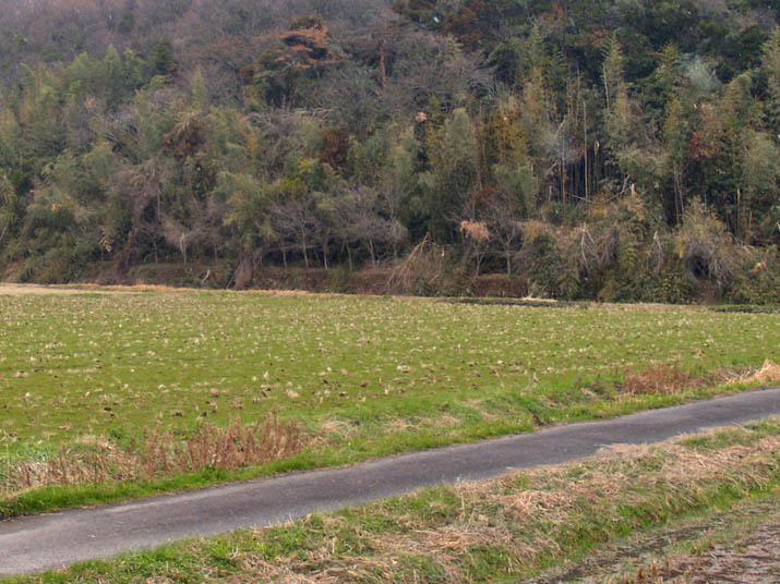 110303 壺瓶山の倒れた木々.jpg