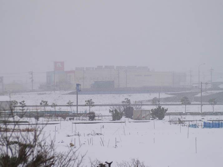 110317 雪で霞むナフコ米子東店.jpg