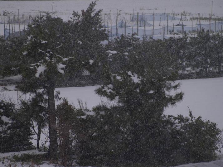 110317 激しい雪.jpg