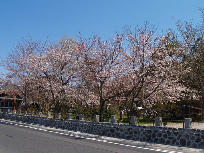 110406 日吉神社 道路沿い.jpg