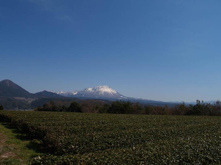 110407 茶畑と大山.jpg