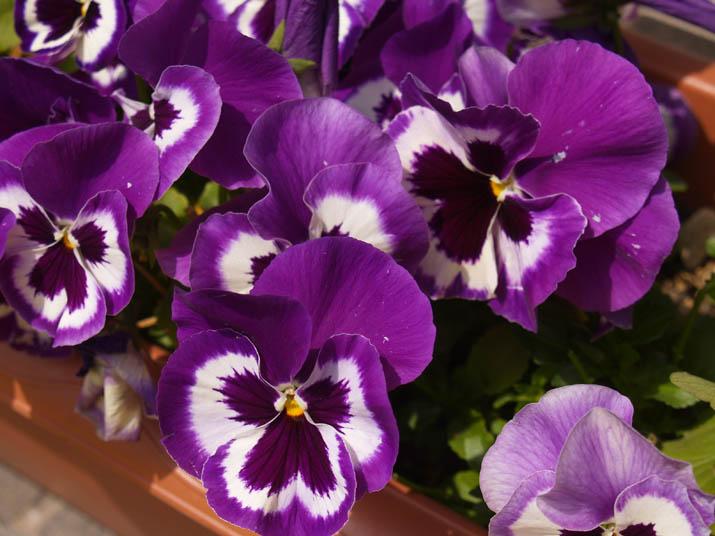 110410 紫色の花.jpg
