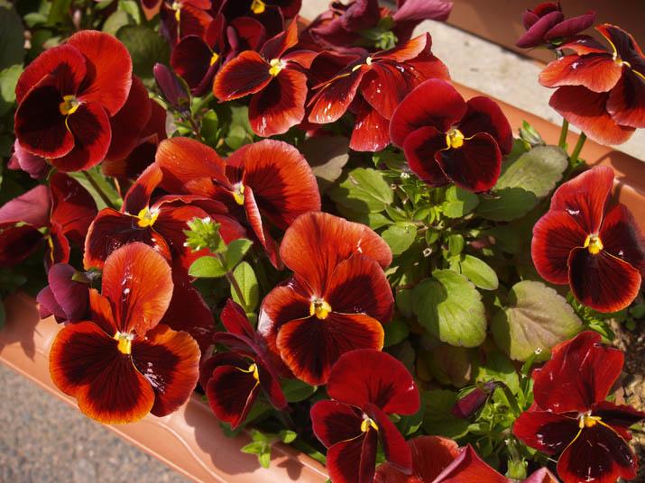 110410 赤い花.jpg