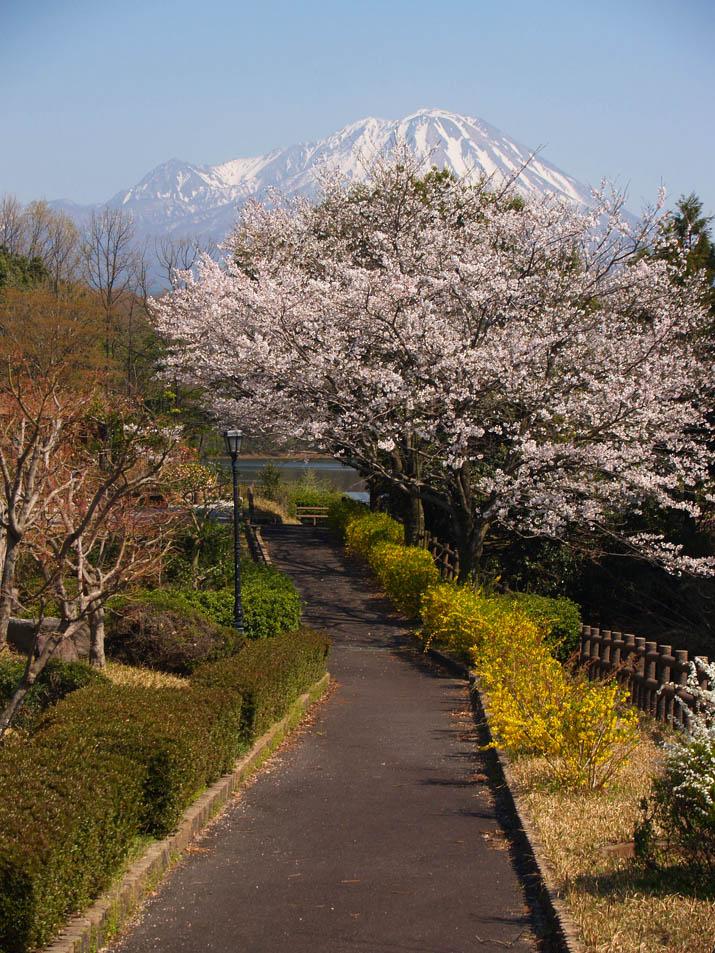 110415 大山と桜.jpg