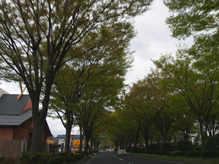 110416 フロントガラス越しに見る431号線 ケヤキの並木道.jpg