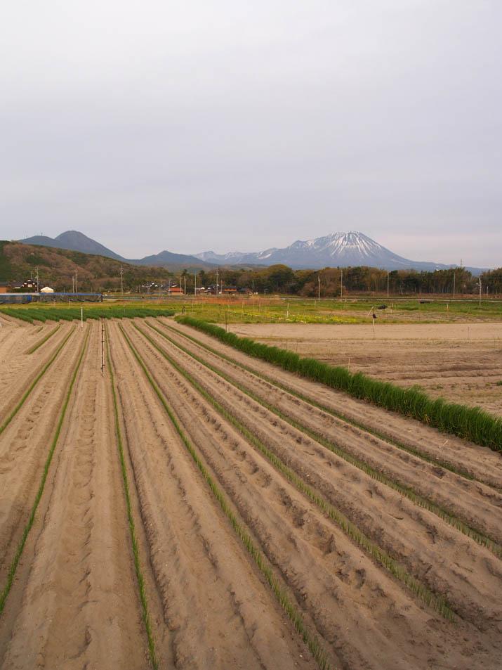 110417 ネギ畑と大山.jpg
