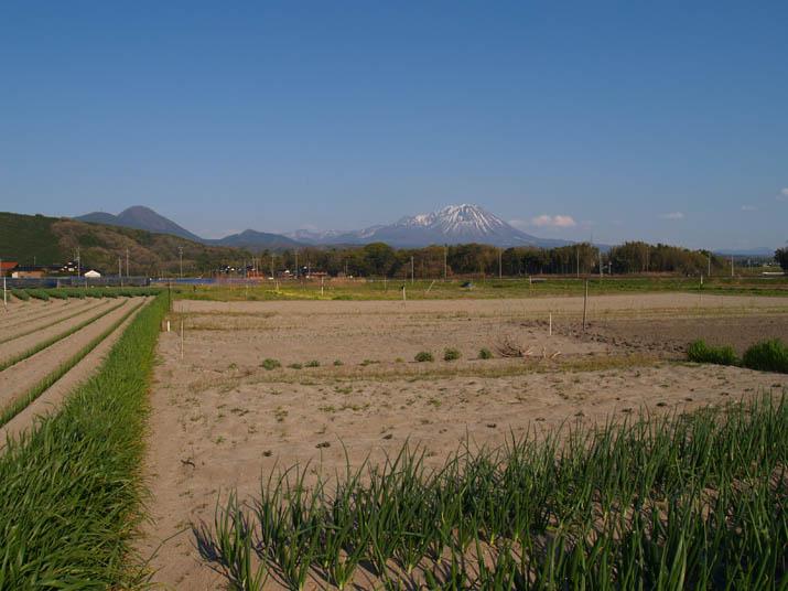 110425 ネギ畑と大山.jpg