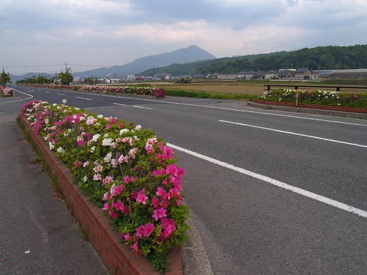 110509 ツツジ咲く海岸道路.jpg