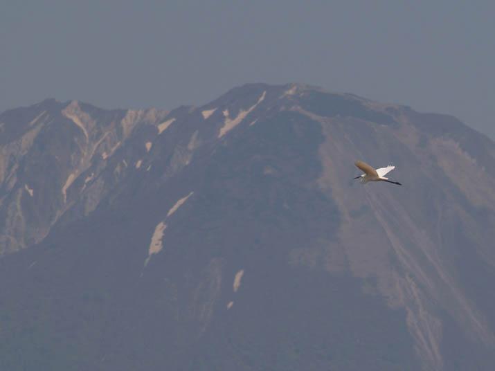 110518 大山と白鷺.jpg