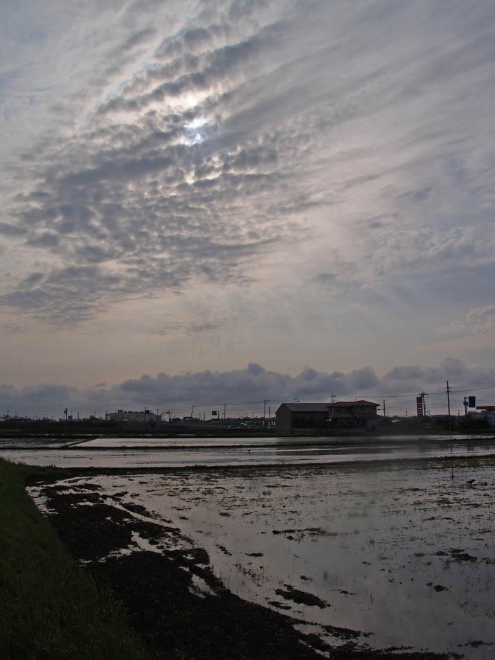 110522 畑から水田に.jpg