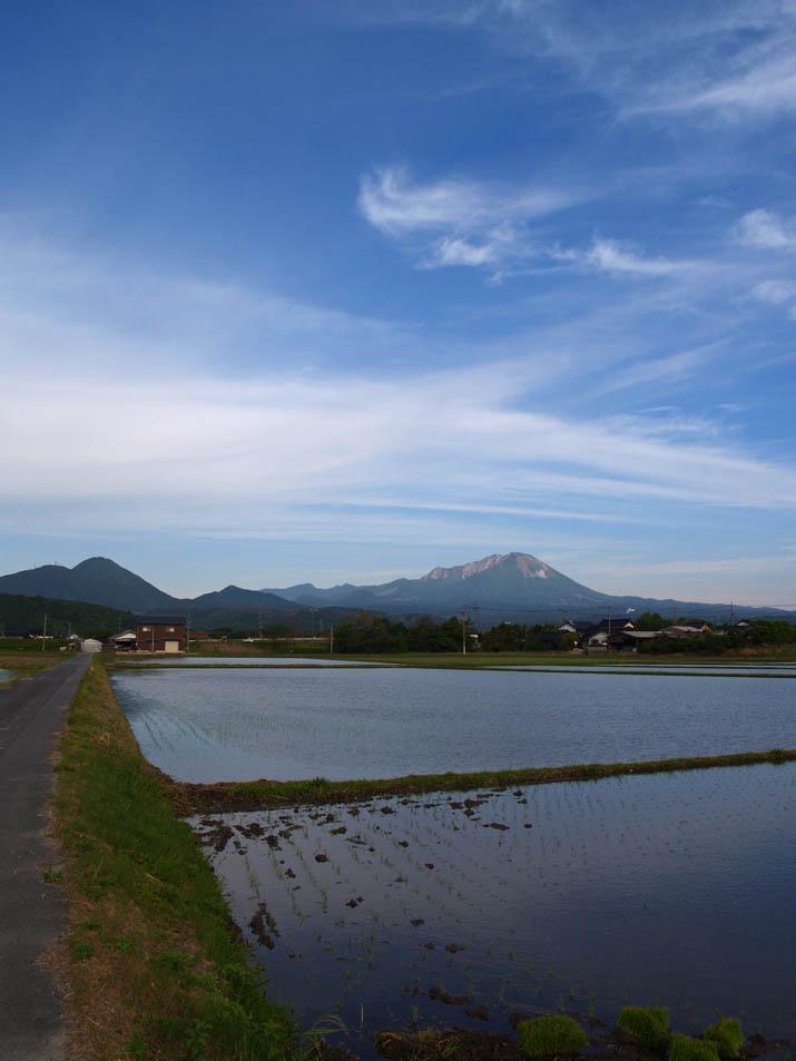 110524 水田と大山.jpg