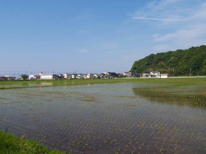 110607 青空と水田と壺瓶山.jpg