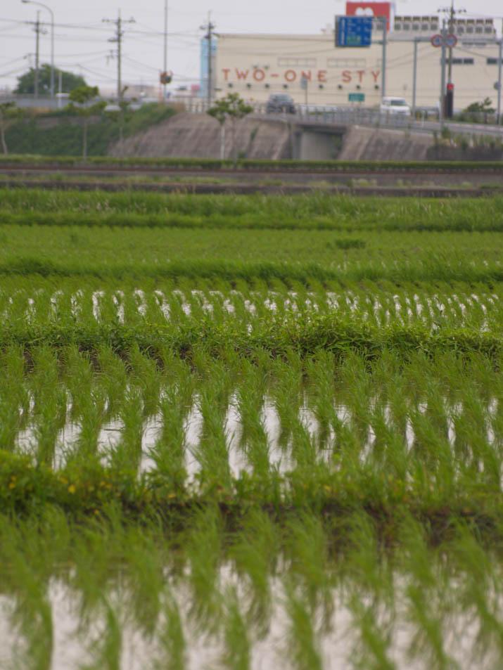 110614 水田とナフコ.jpg