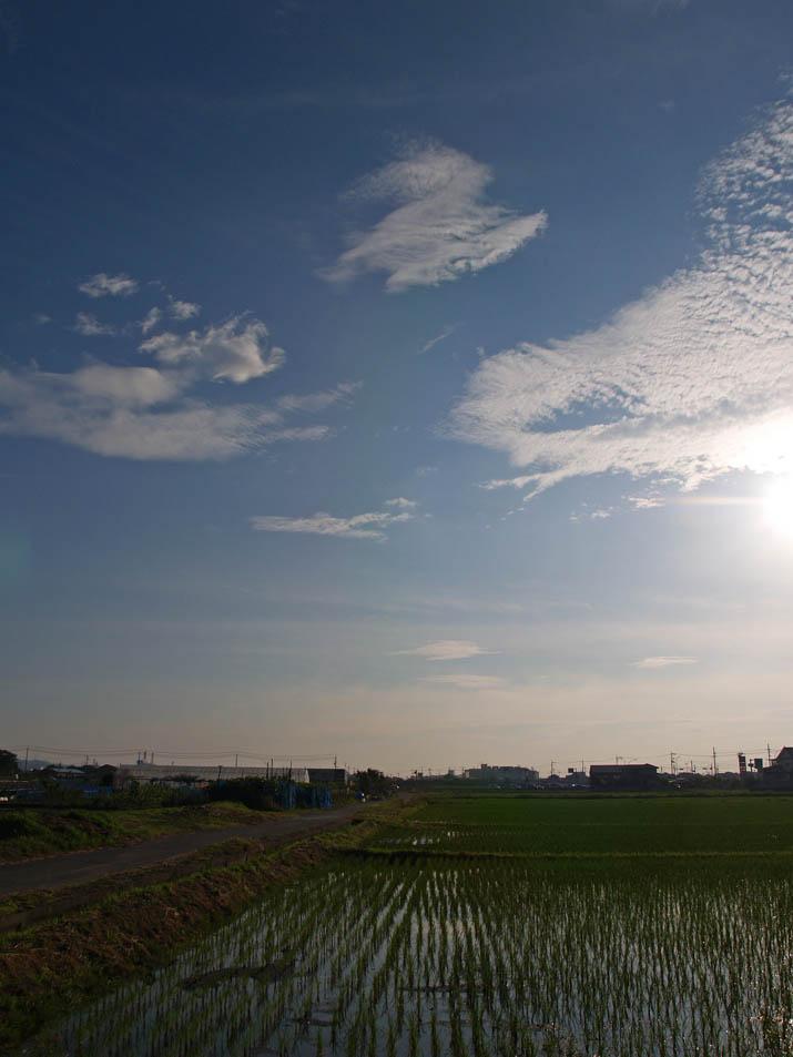 110623 雨上がりの青空.jpg