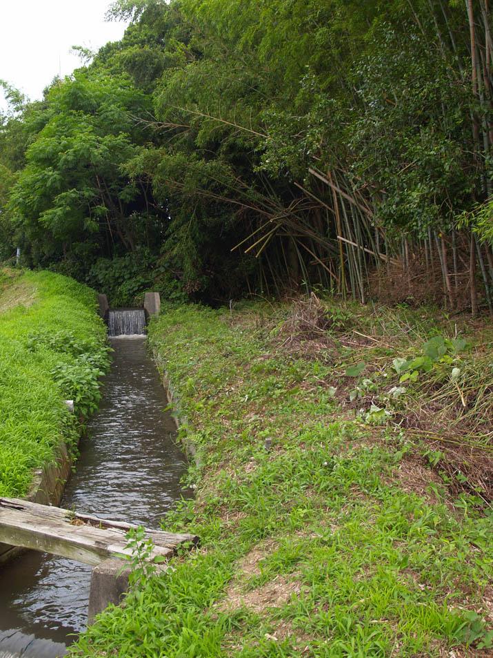 110629 竹林と小川.jpg