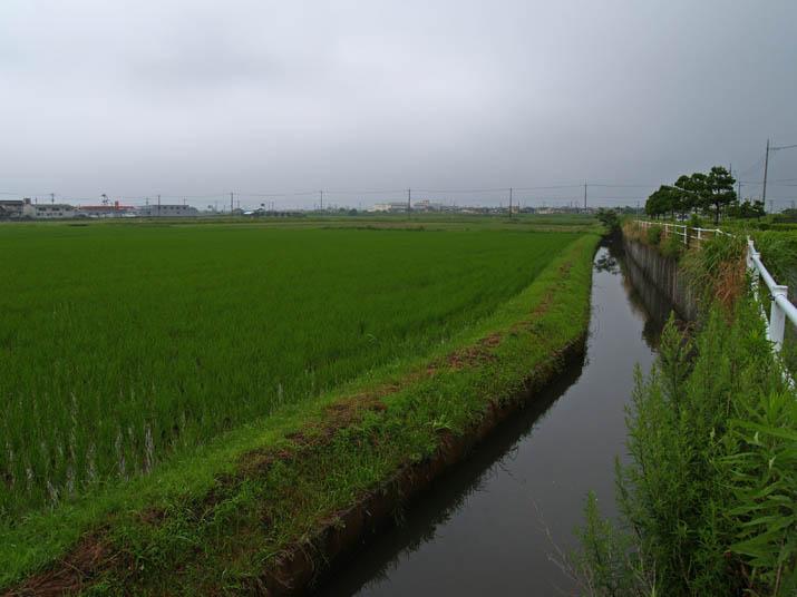 110704 水田横の用水路.jpg