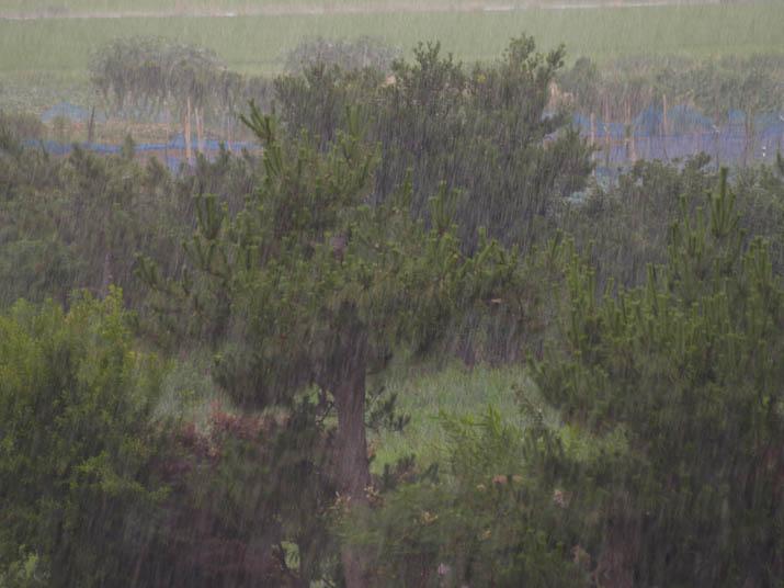 110713 激しい雨.jpg