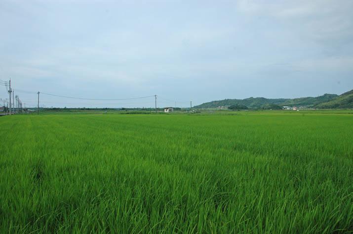 110728 田園のある淀江の景色.jpg