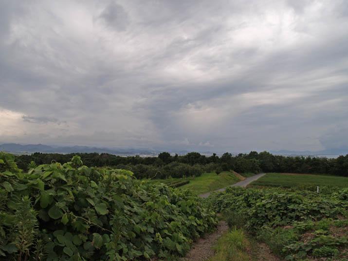 110821 草に覆われた山道.jpg