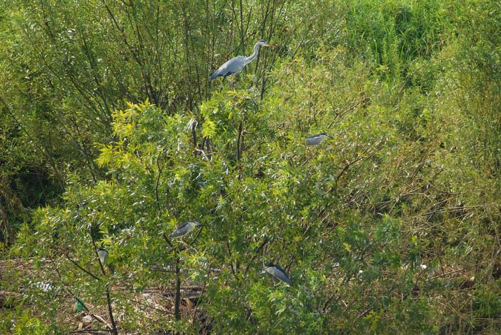 110908 鳥の成る木.jpg