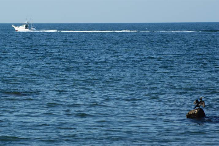 110913 船と海鵜.jpg