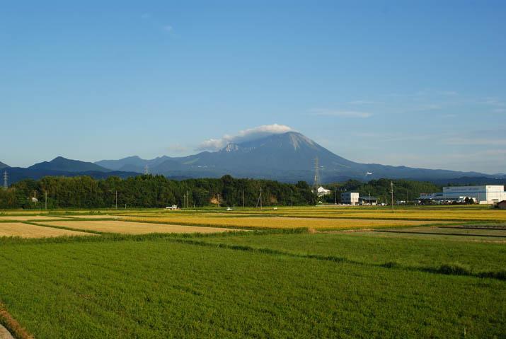 110915 緑の休耕田と大山.jpg