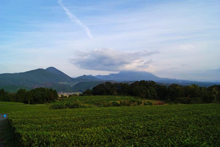 110926 大山と壺瓶山の茶畑.jpg