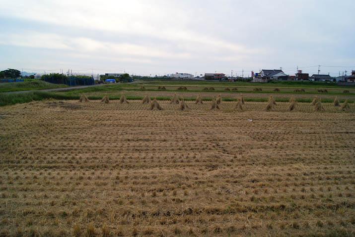 110928 稲刈りのあと.jpg