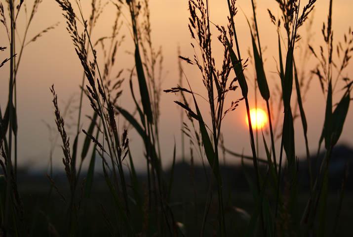 111013 夕日と草.jpg