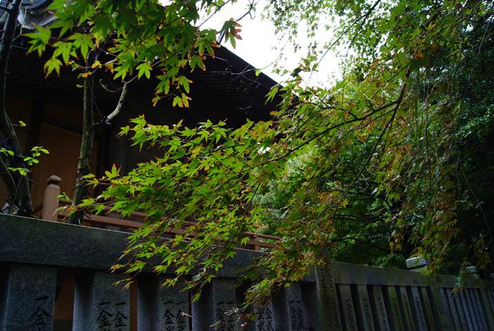 111022 三輪神社の楓.jpg