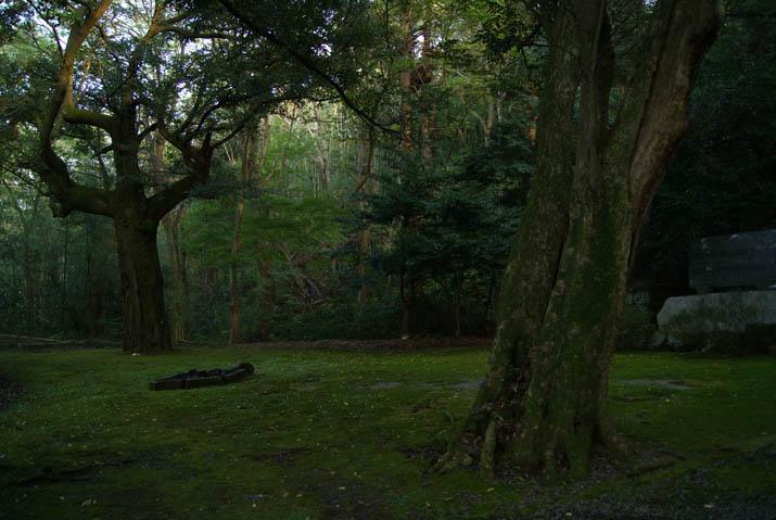 111107 緑に包まれた日吉神社の境内.jpg