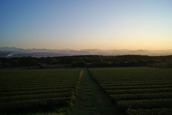 111116 壺瓶山の茶畑と山々.jpg