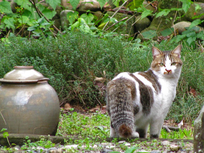 111207 喧嘩してた猫その2.jpg