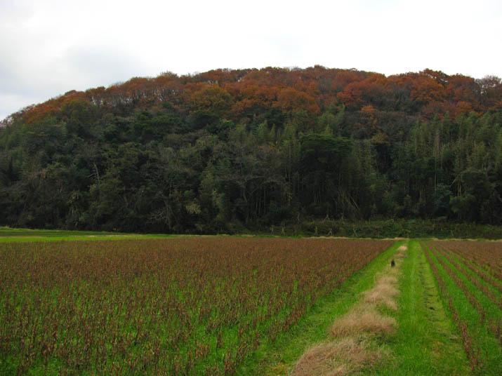 111215 壺瓶山の紅葉と大豆畑.jpg