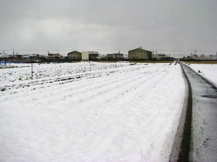 120104 白い畑と雪の道.jpg
