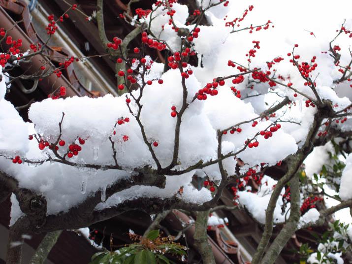 120208 赤い実と白い雪と氷柱.jpg